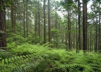 日本の山の木をつかいます