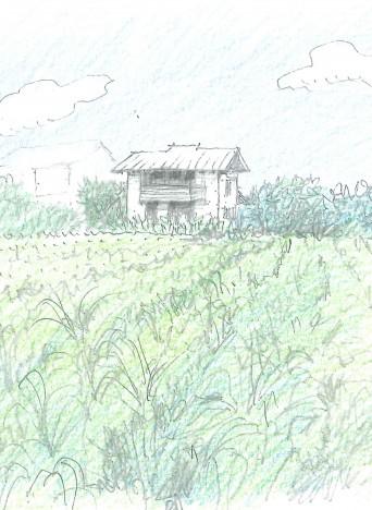 トウモロコシ畑の木組みの家