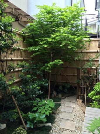 木組みの家「高円寺の家」庭木140429