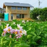 木組みの家「我孫子の家2」トウモロコシ畑